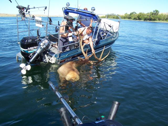 Elk fishing for Fort peck fishing report