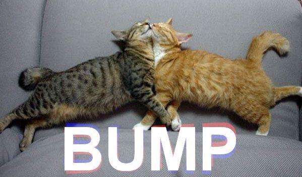 Name:  cat bump..jpg Views: 136 Size:  38.3 KB